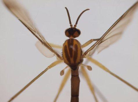 nightwishinsect